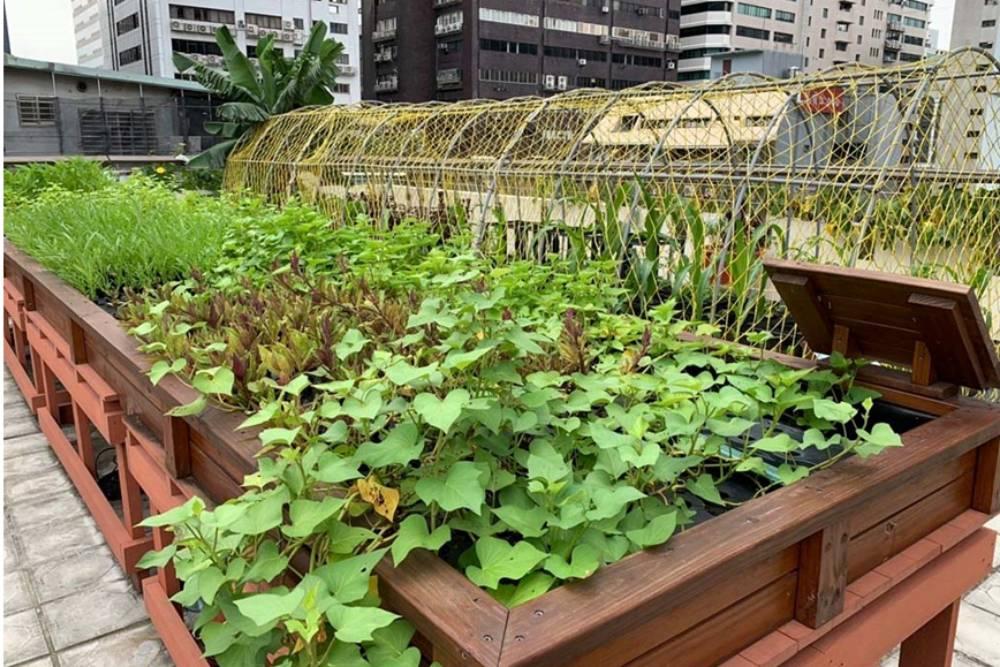 屋頂種菜去! 城市田園綠化春天播種好食機