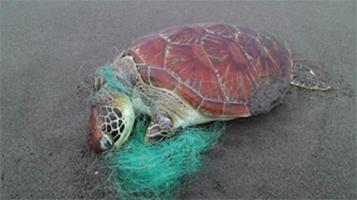 海洋廢棄物與海龜之間的戰爭-1