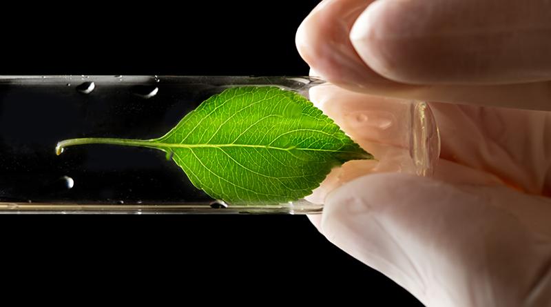 科學家研發人造樹葉  模擬植物光合作用01