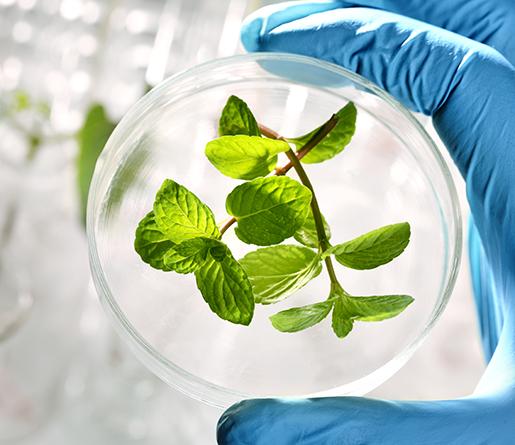 科學家研發人造樹葉  模擬植物光合作用02
