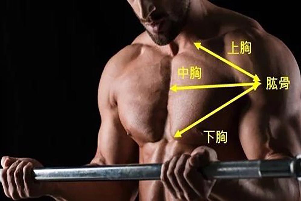 破解5大胸肌訓練迷思 World Gym教官分享練胸秘訣