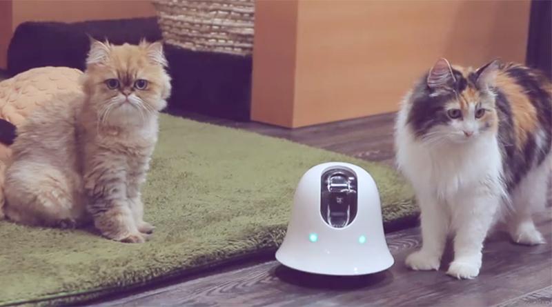 這是新朋友嗎?喵~小小機器人ilbo和寵物一起看家