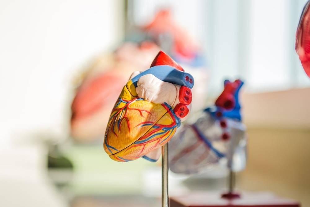 血管、細胞一應俱全!以色列醫療技術再突破  發表3D列印心臟