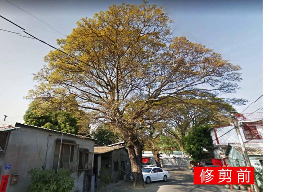 行道樹修剪頻遭斷頭無法可管!陳椒華協民團籲修法