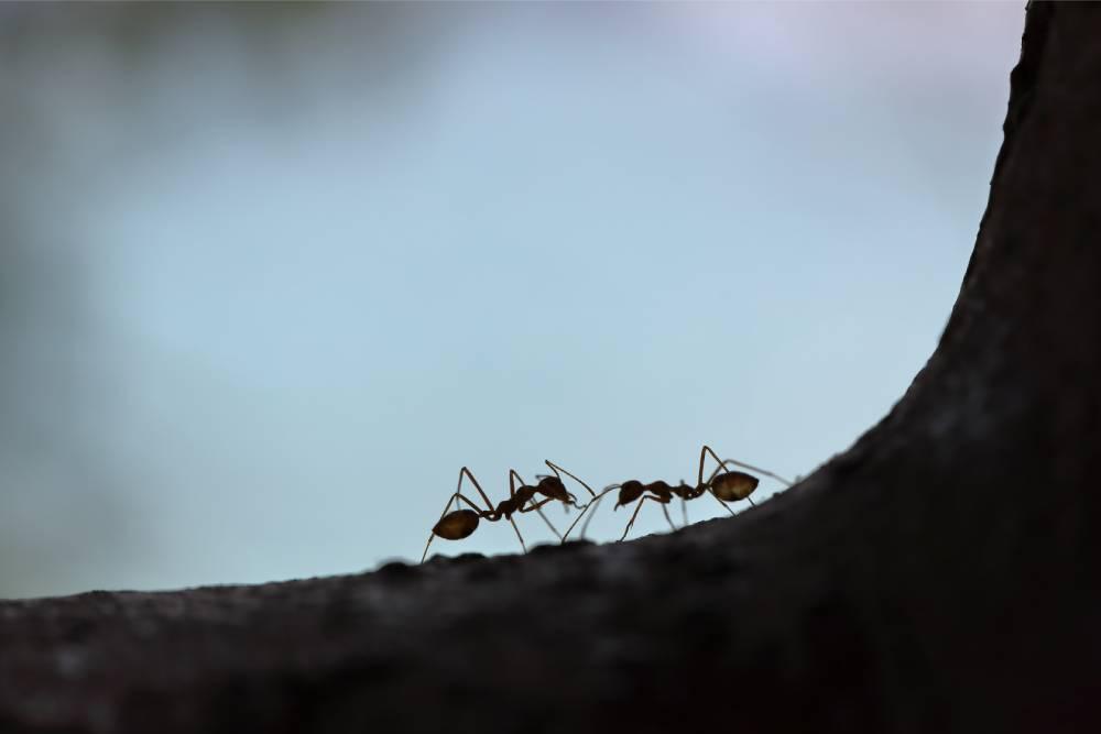 【投書】千丈之堤 潰於蟻穴