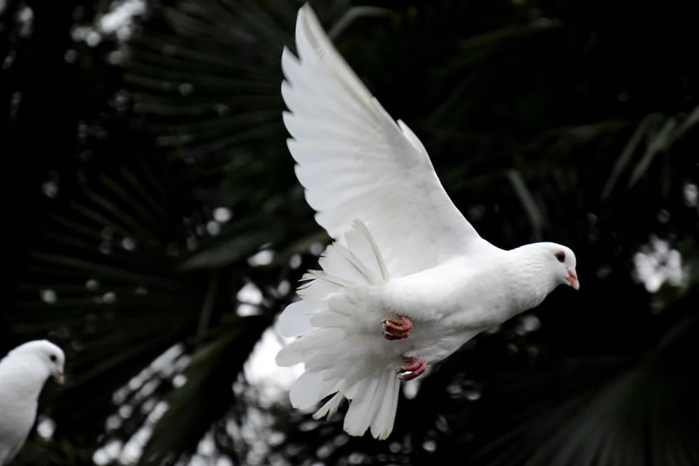 【投書】期待執政者和平理性地改革