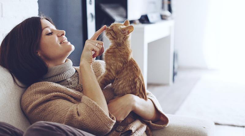 家貓成野生動物殺手 專家呼籲別放養