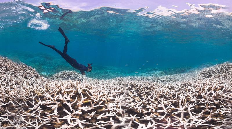 大堡礁北部2/3珊瑚死亡 科學家:像「被煮熟」