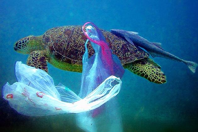 可分解塑膠袋「假的」?消基會呼籲政府明訂規範