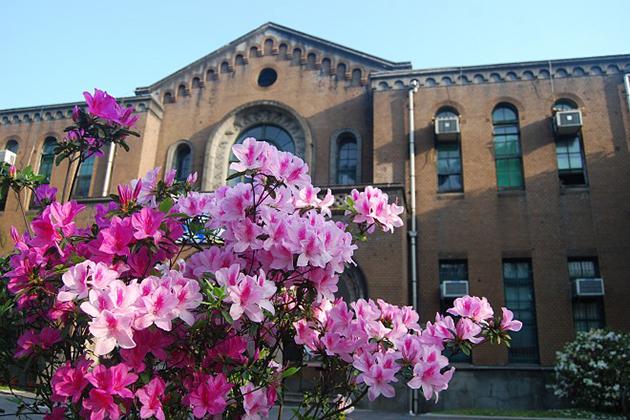 北市加碼打造3月杜鵑花季 全市栽種逾40萬株