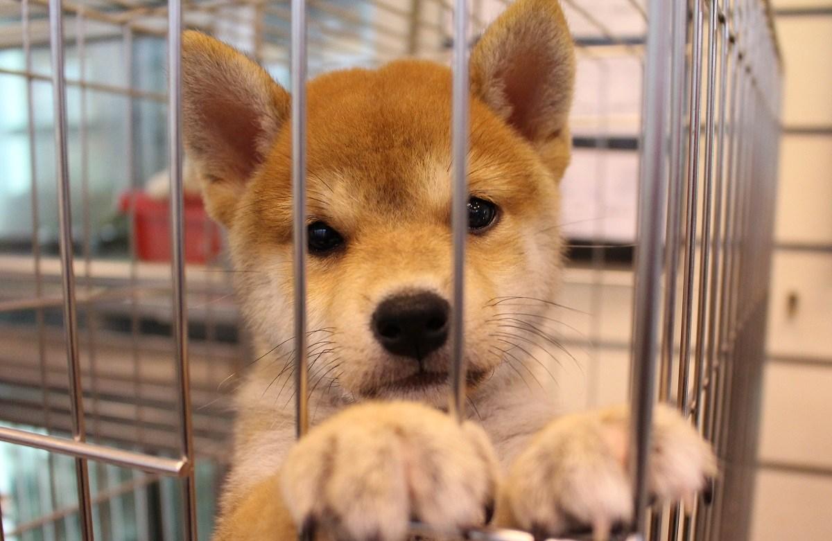 源頭降低棄養 基隆市率先停發寵物繁殖證照