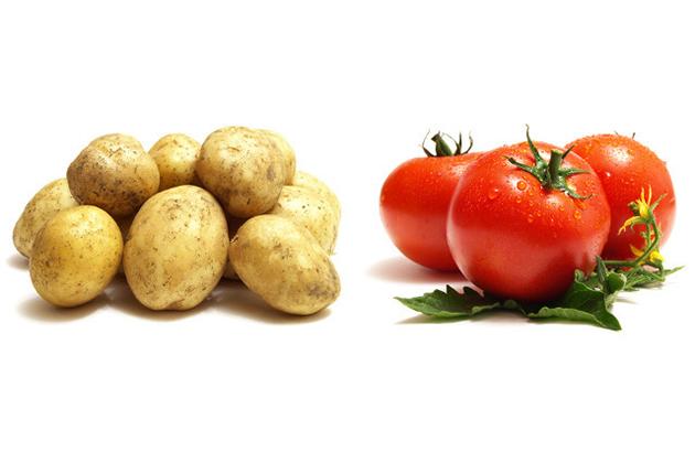 破解謠言:番茄吃多致命?!