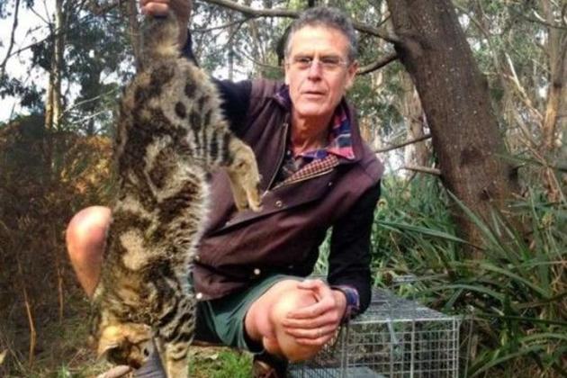 野貓成生態殺手 澳洲政府展開撲殺