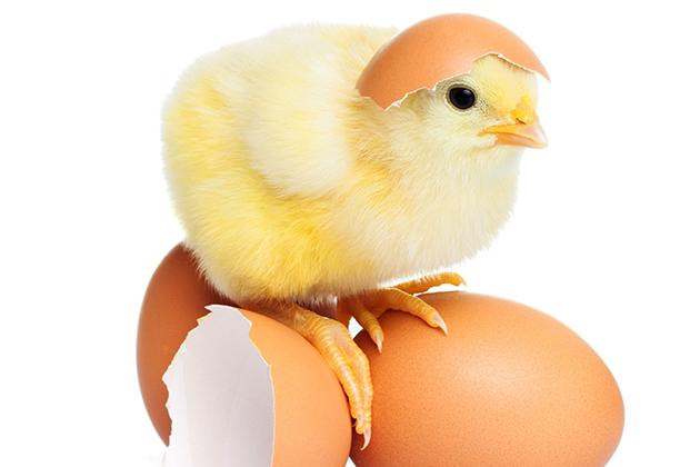 關於「洗選蛋」你知道多少?