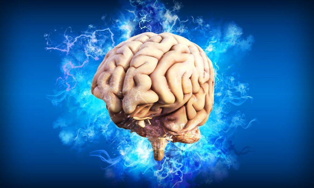60歲後大腦每年0.5%速率萎縮!  預防失智不能忽略「三動」