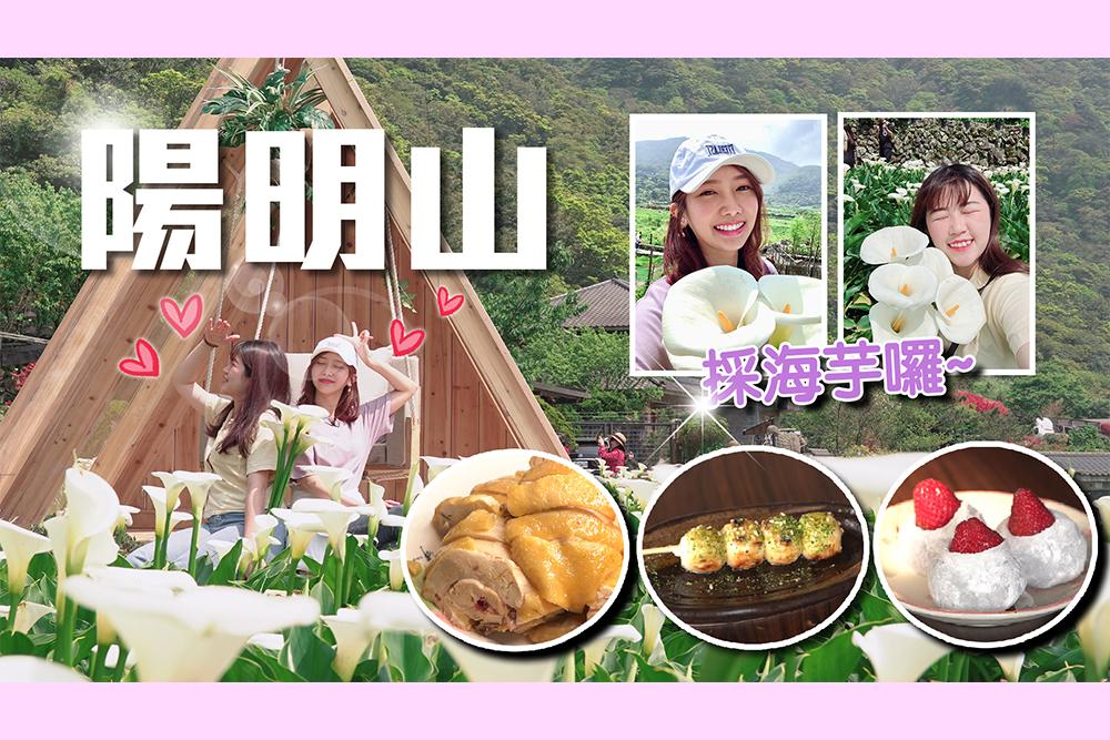 【有影】海芋季浪漫來襲!超仙拍照景點推薦 外加陽明山野菜美味 必吃肥嫩白斬雞