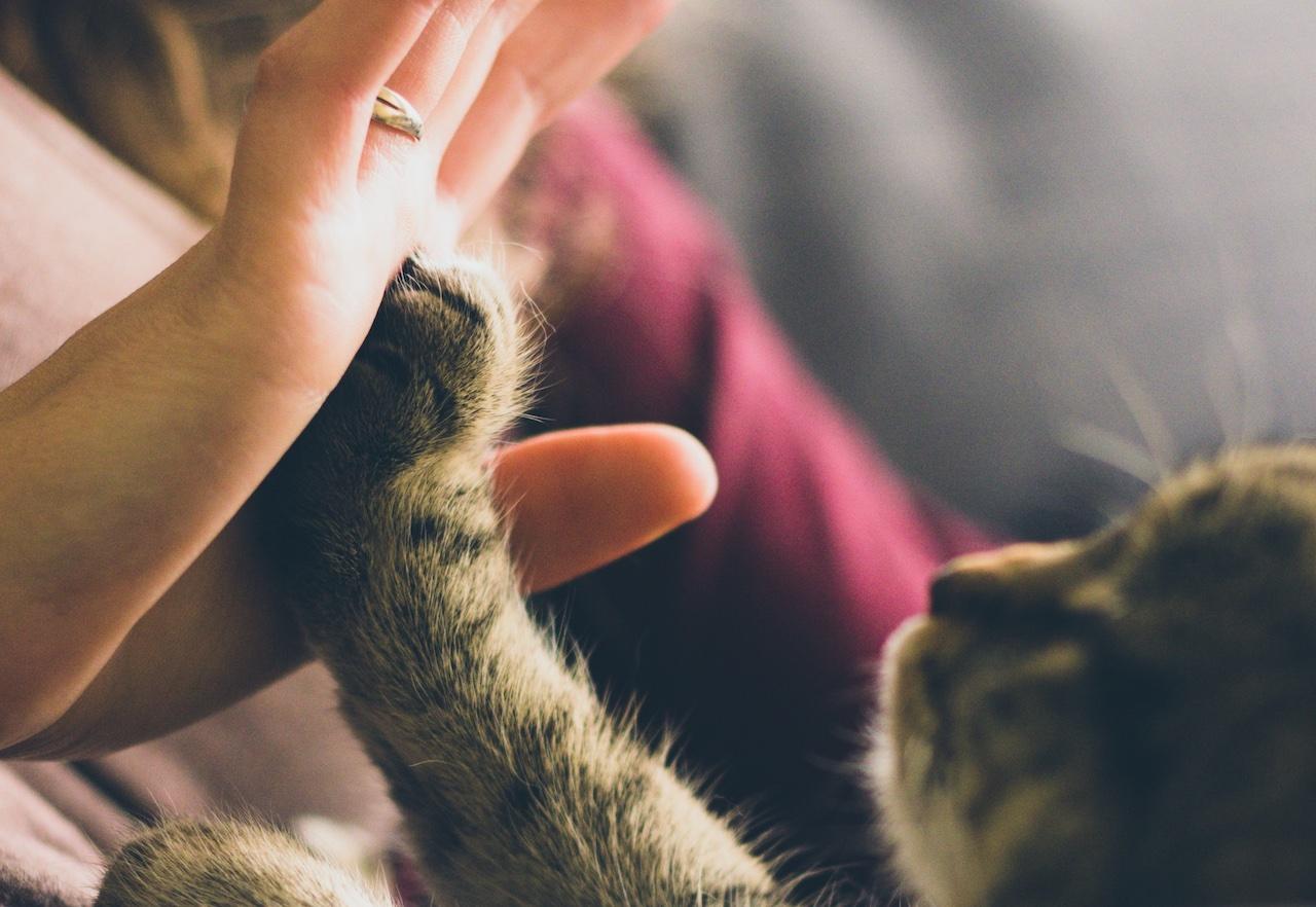【有影】居家防疫期間 與毛小孩共享芳香療法的美好