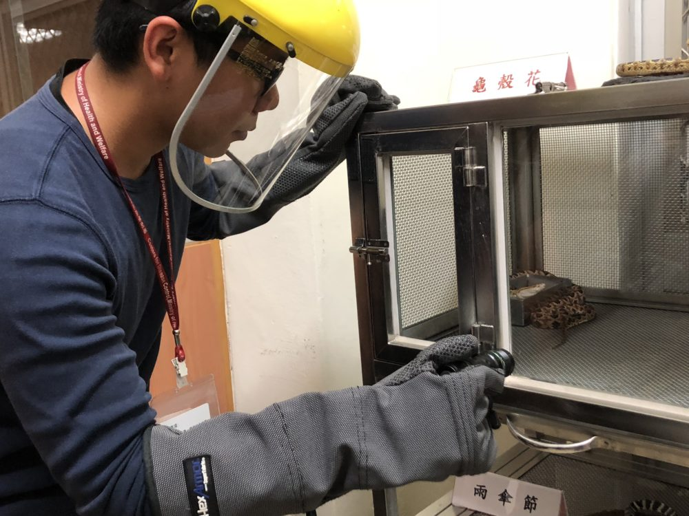 【有影】全台最大「毒蛇庫」竟藏台北市區! 衛福部養200條毒蛇年救千人