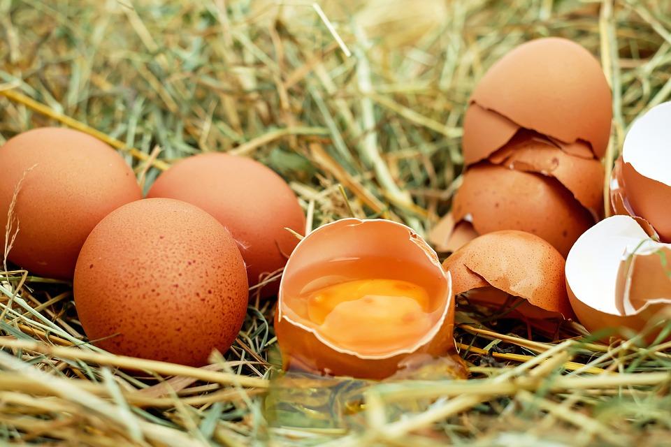 2年連3起「壞蛋」加工案 買蛋不得不知20天「保鮮期」