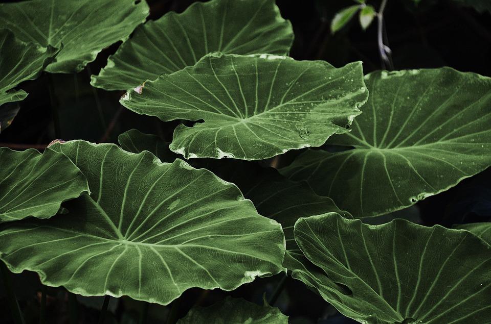 【有影】研究:家裡種對這類盆栽  可減PM2.5傷肺傷腦影響
