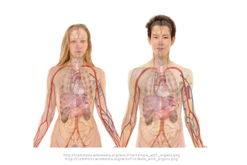 預防人生彩色變黑白!新北市民看過來 免費肝癌篩檢報你知