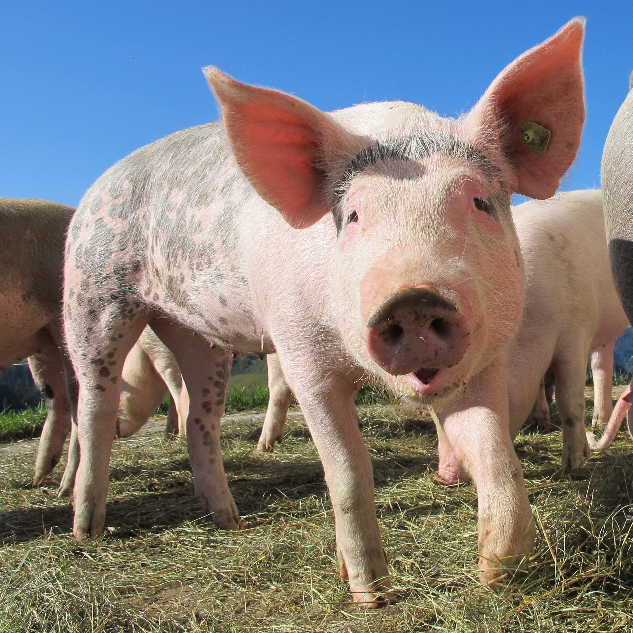 國光生技攜手農科院 投入動物疫苗開發