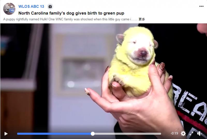 外星狗寶寶?雪白牧養犬生下螢光綠幼犬 送醫後獸醫曝神秘真相